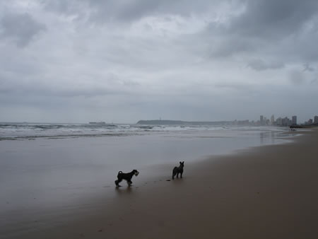 Durban Beach last week - when I did have my camera - and immediately after the cleaners had been through...
